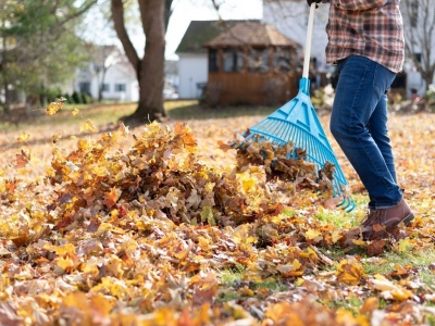Top Tips for Autumn Yard Maintenance