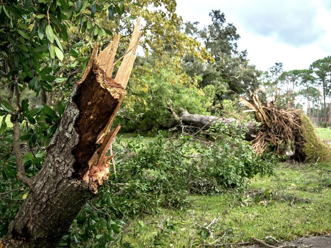 What To Do When a Tree Falls in Your Yard